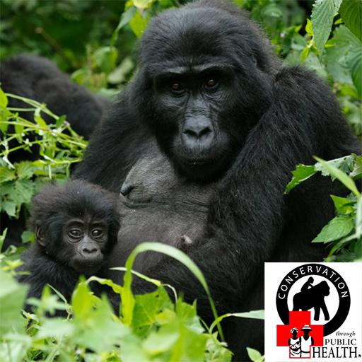 Gorilla and Wildlife Conservation in Africa | Conservation Through Public  Health
